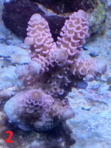 reef 591.jpg