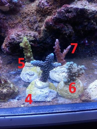 reef 599.jpg