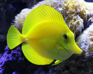 tang_yellow1.jpg