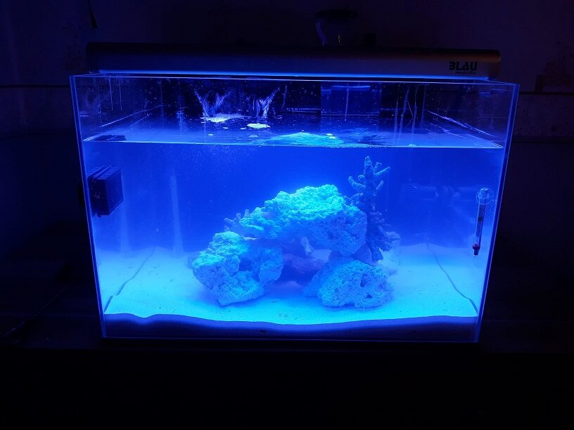 2 akwarium ze skałą.jpg