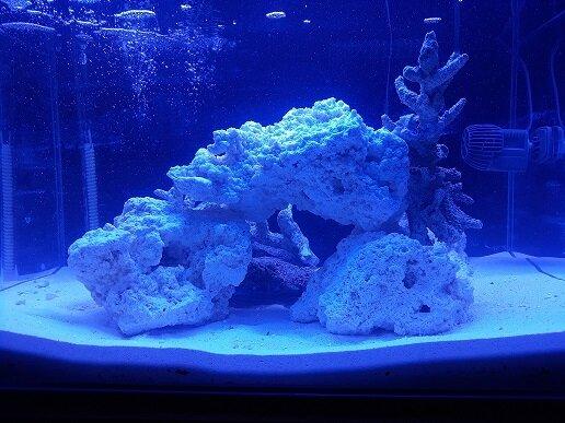 5 akwarium ze skałą.jpg