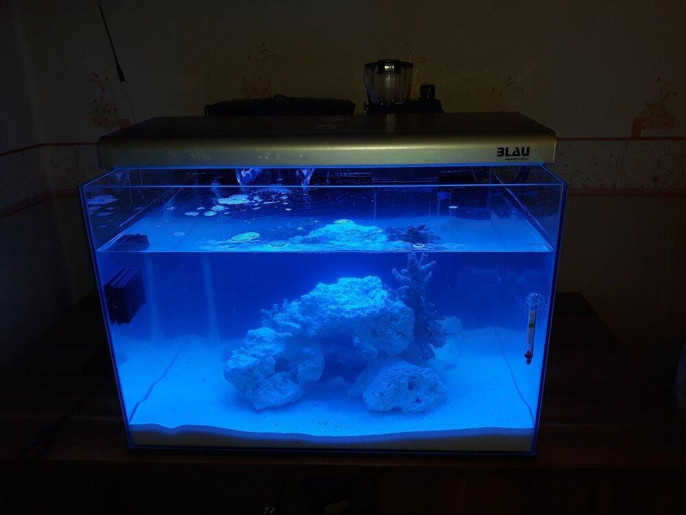 4 akwarium ze skałą.jpg